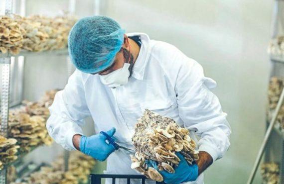 Avance farmacológico sobre los hongos y sus propiedades antioxidantes