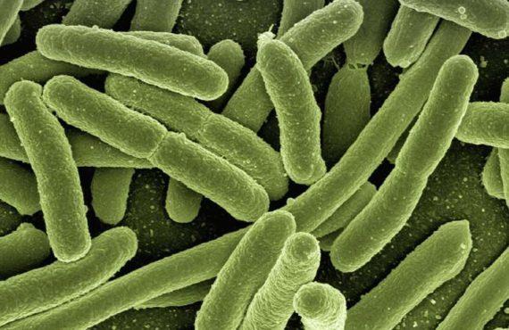 Farmacoresistencia de las bacterias: nuevo estudio del tema