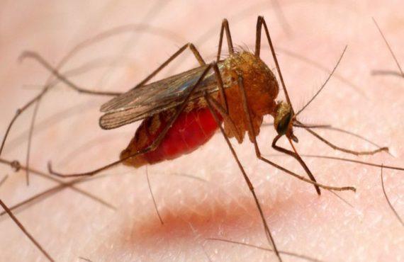 La farmacología contra la malaria