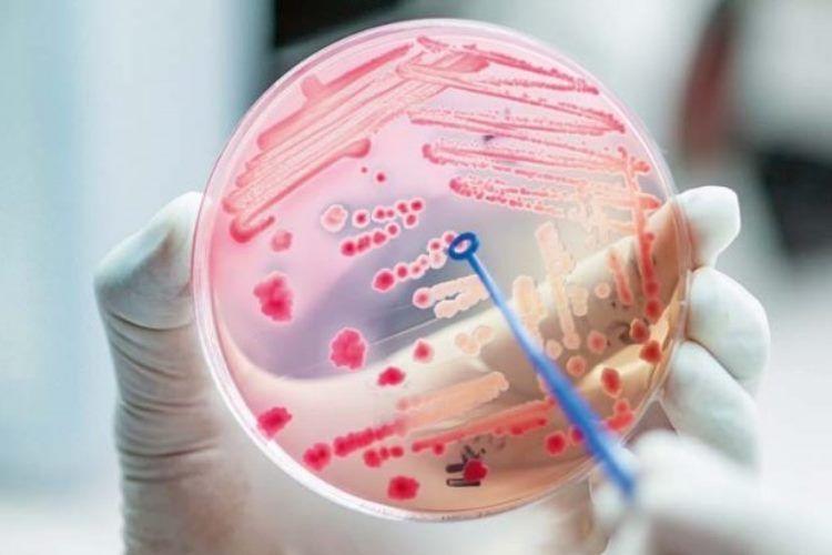 Lucha farmacológica contra las bacterias multirresistentes